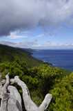 The coastline of Pico island, Azores Stock Images