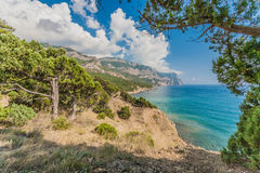 Coastline with pine trees Stock Photo