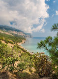 Coastline with pine trees Royalty Free Stock Photography