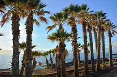 Coastline scene with palm trees from southern Tenerife.Canary Island. Spain. Royalty Free Stock Photos