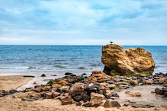 Coastline on the sea. Beautiful landscape on sea. Stones on the Stock Image