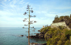 Coastline seaview with agave flower and castle Stock Image