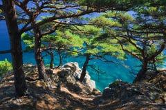 Coastline trees 16 Royalty Free Stock Photo
