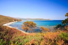Coastline trees Stock Image
