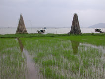 Coastline Vietnam. Rice-field along the coastline of Vietnam Royalty Free Stock Images