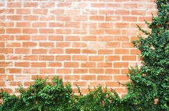 Coat button on the brick wall garden decoration Royalty Free Stock Images