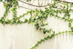 Coatbuttons en el fondo blanco de la pared Foto de archivo libre de regalías