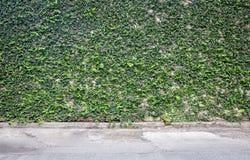 Coatbuttons na parede, fresca Fotos de Stock Royalty Free