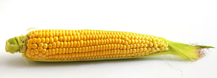 Cob. Close up view of the Corn on cob on white stock image