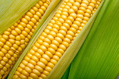 Cob background Stock Photo
