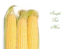 Cob of corn Royalty Free Stock Photo
