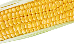 Cob of corn Stock Photography