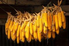 Cob of corn drying next to the Camino de Santiago