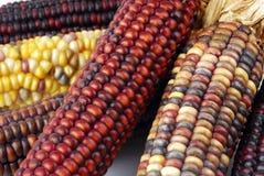 Cob corn Indian Stock Photography