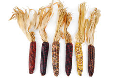 Cob corn Indian isolated Stock Images
