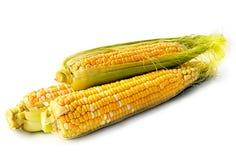 Cob corn  Royalty Free Stock Photography