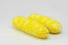 cob gotujący kukurydzany cukierki Zdjęcie Royalty Free