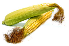 Cob isolated Royalty Free Stock Photography