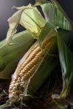 cob kukurudzy zieleni liść Fotografia Royalty Free