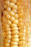 cob kukurydza Zdjęcie Stock