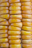cob kukurydza Zdjęcia Stock