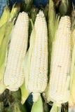 cob kukurydzy oferta zdjęcie stock