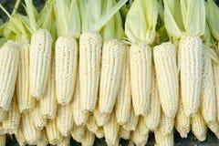 cob kukurydzy oferta obrazy royalty free