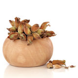 Cob Nuts Royalty Free Stock Photography