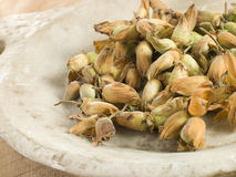 Cob Nuts Stock Photography