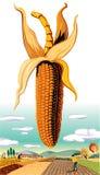 Cob of ripe corn. In the landscape Stock Image