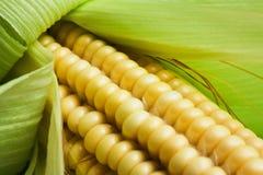 Cob of sweet corn Stock Photos