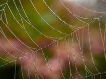 Cob web with dew Royalty Free Stock Photos