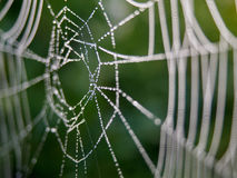 Cob web with dew Stock Photography