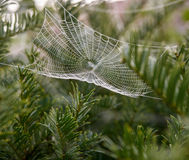 Cob web with dew Royalty Free Stock Photography