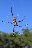 Cob-web spider against blue sky Royalty Free Stock Images