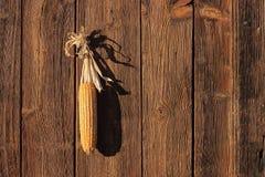 Cob wieszający na drewnianym drzwi Zdjęcie Royalty Free
