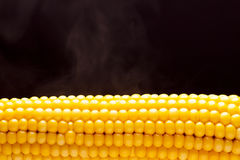 The cob of yellow boiled corn Royalty Free Stock Photo