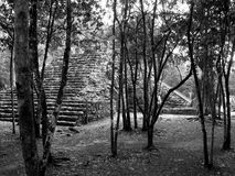 Coba Mayan Ruins Royalty Free Stock Photos