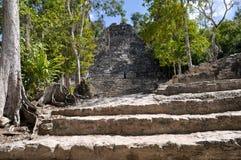 Coba Mayan Ruins in Mexico Stock Image