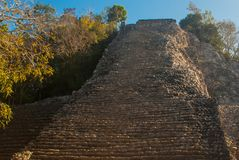 Coba, Messico, Yucatan: Piramide maya di Nohoch Mul in Coba Di sopra sono 120 stretti ed i punti ripidi Fotografie Stock Libere da Diritti