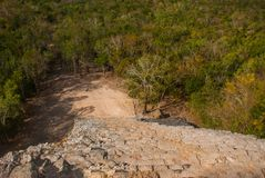Coba, Mexico, Yucatan: Coba, Mexico, Yucatan: top view of the jungle and the steps of the great pyramid Coba Nohoch Mul.  Royalty Free Stock Photos