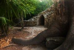 Coba Mexico, Yucatan: Det arkeologiska komplexet, fördärvar och pyramider i den forntida Mayan staden arkivfoton