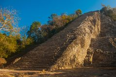 Coba, Mexico, Yucatan: Mayan Nohoch Mul pyramid in Coba. Upstairs are 120 narrow and steep steps. Climbing to the top is the most popular activity of tourists Royalty Free Stock Photo