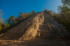 Coba Mexico, Yucatan: Mayan Nohoch Mul pyramid i Coba Är uppför trappan smala 120 och branta moment Fotografering för Bildbyråer