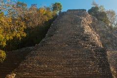 Coba Mexico, Yucatan: Mayan Nohoch Mul pyramid i Coba Är uppför trappan smala 120 och branta moment Royaltyfria Foton