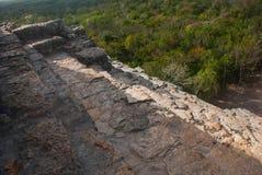 Coba Mexico, Yucatan: Mayan Nohoch Mul pyramid i Coba Är uppför trappan smala 120 och branta moment Royaltyfri Bild