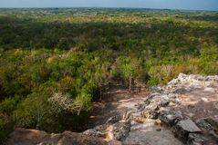 Coba, Mexico, Yucatan: top view of the jungle from the great pyramid of Coba Nohoch Mul.  Royalty Free Stock Image
