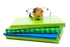 Cobaia com vidros em uma pilha de schoolbooks fotografia de stock royalty free