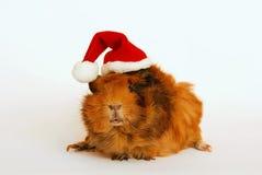 A cobaia gosta de Papai Noel Fotos de Stock Royalty Free