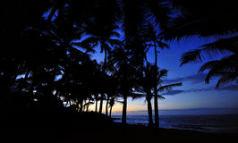 Cobalt Sunset with Palm Trees in Maui Hawaii. A deep cobalt sky backs the silhouettes of palm trees in the fading Hawaiian evening on Maui Stock Image